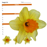 April2015DaffodilForms
