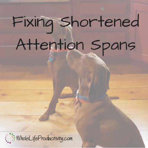 Fix Short Attention Spans